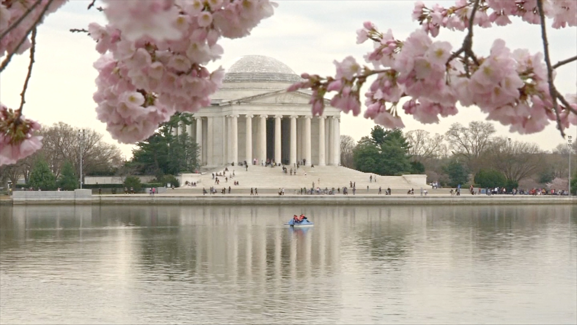 Над цветущей сакурой в Вашингтоне взмыли десятки воздушных змеев