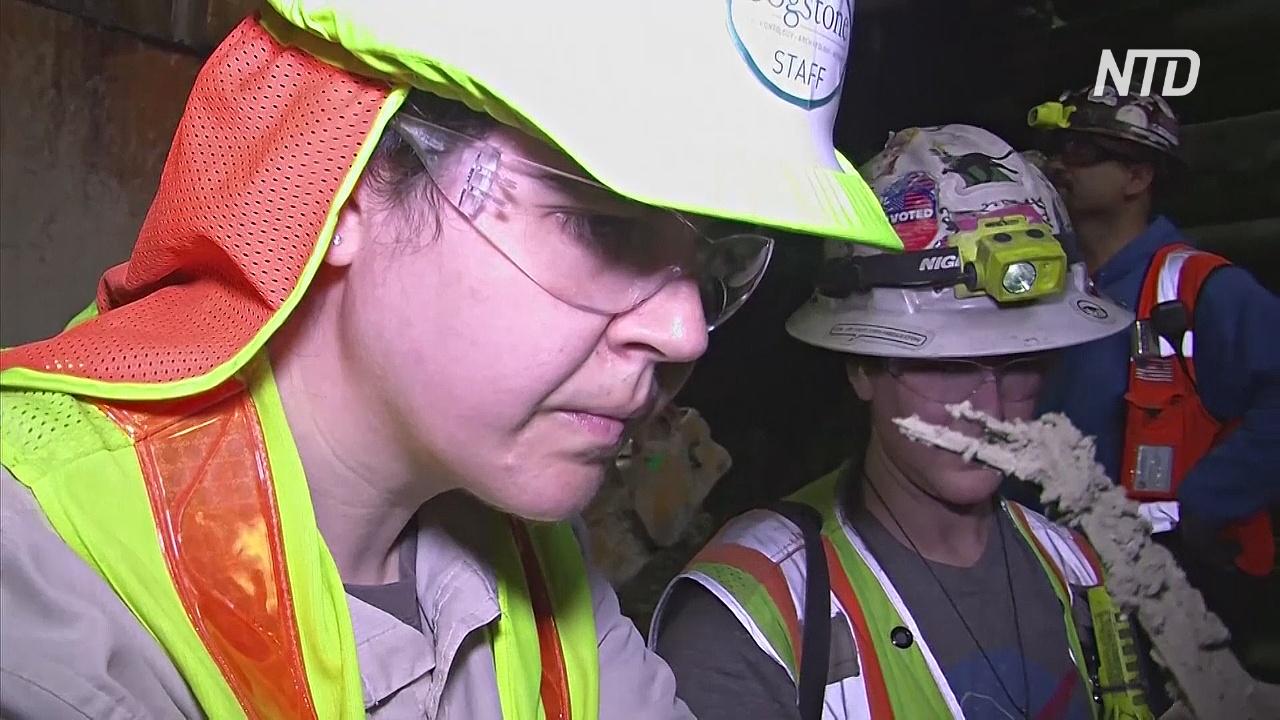 Во время строительства метро в Лос-Анджелесе нашли 600 останков животных