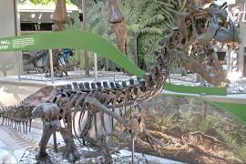 В Вашингтоне готовят грандиозную выставку скелетов динозавров