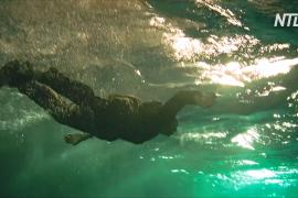 Новая бельгийская киностудия позволит снимать подводные сцены