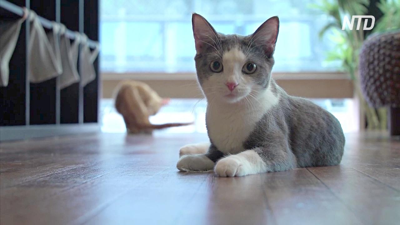 Учёные подтвердили, что кошки откликаются на своё имя