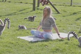 Йогу с лемурами практикуют в британском заповеднике «Лейк-Дистрикт»