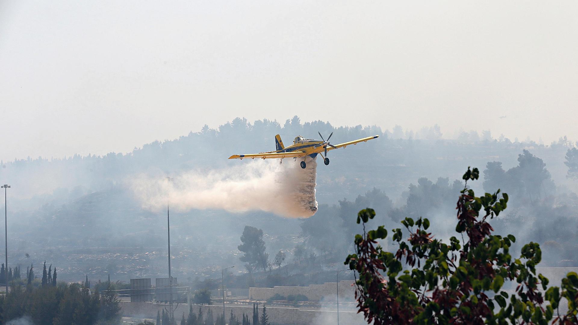 В Израиле испытали новый способ восстановления лесов после пожаров