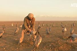 Ловля журавлей – хобби и способ выжить для жителя Афганистана
