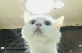 Саудовцев призывают забирать котов и собак из приютов