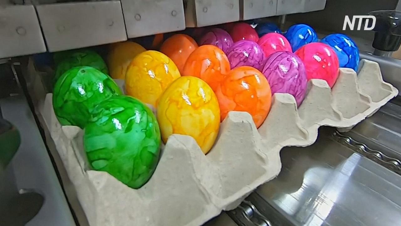 Подготовка к Пасхе: немецкая птицефабрика красит 16 000 яиц в час