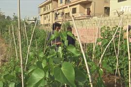 Пакистанец высаживает леса в густонаселённом Карачи