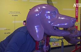 Видеть и слышать, как собака: в Лос-Анджелесе открылась новая выставка