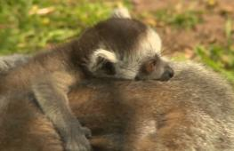 Вроцлавский зоопарк встретил весну беби-бумом