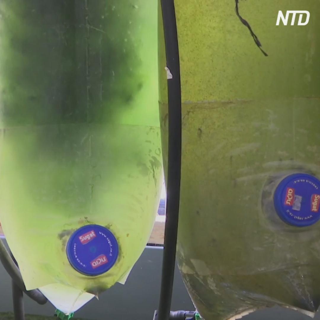 Новый пластик из планктона разлагается в воде за два года