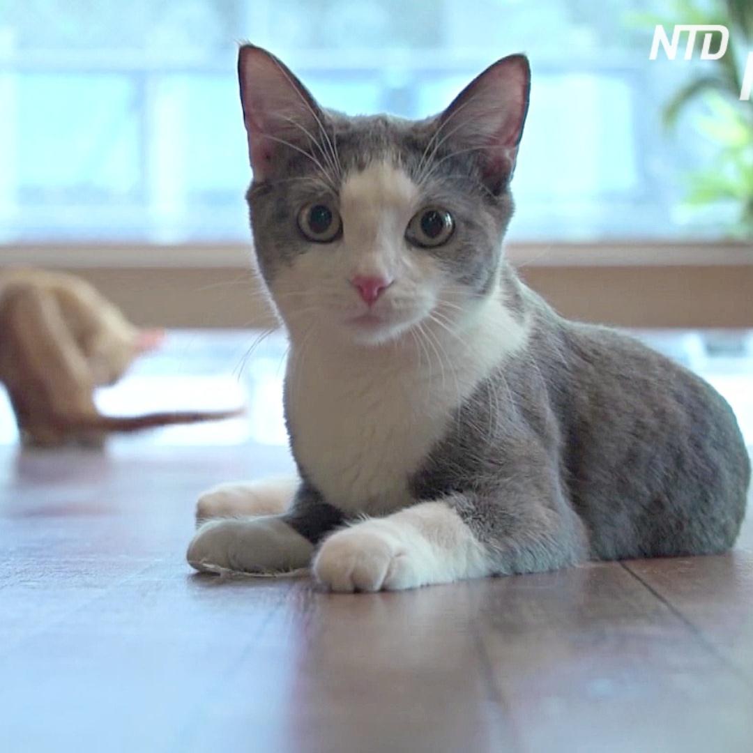 Кошки откликаются на свою кличку – это подтвердили официально