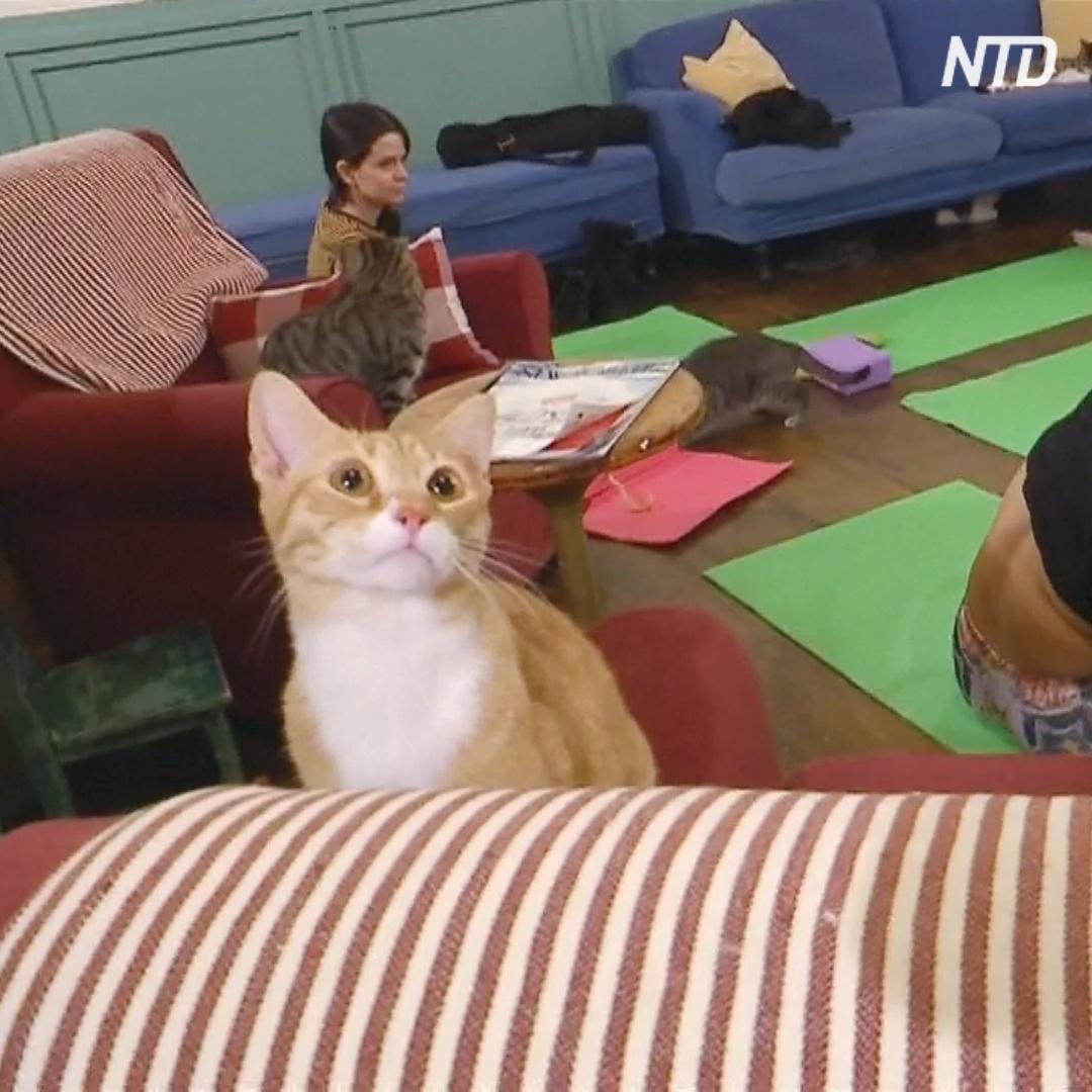 В Нью-Йорке совместили кошек и фитнес