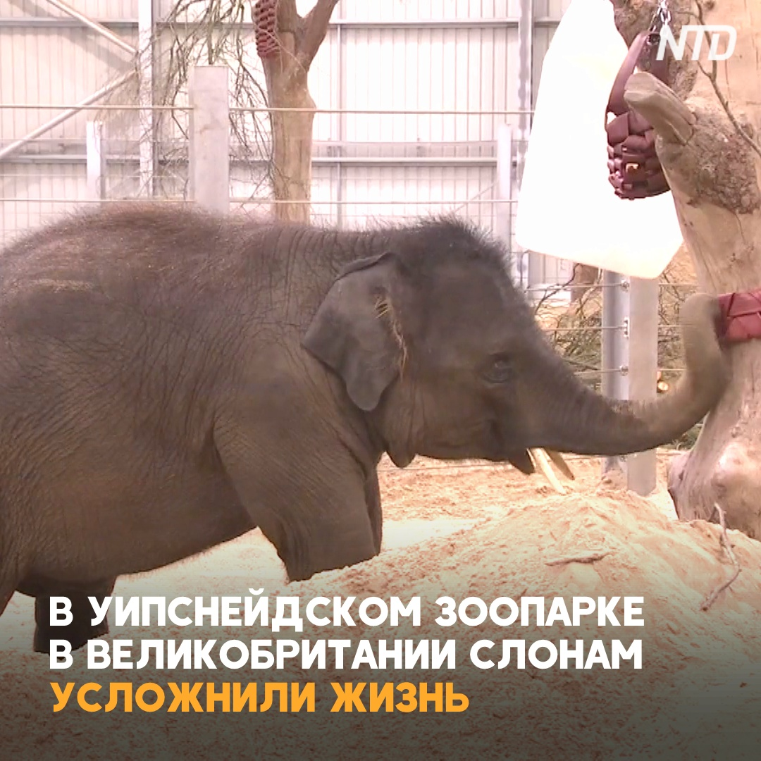 Учёные усложнили жизнь слонов, чтобы избавить их от депрессии