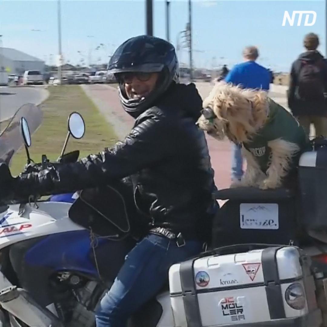 Человек и собака на мотоцикле: тысячи километров по Южной Америке