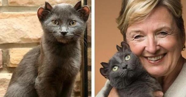 Кота с четырьмя ушами назвали Йодой