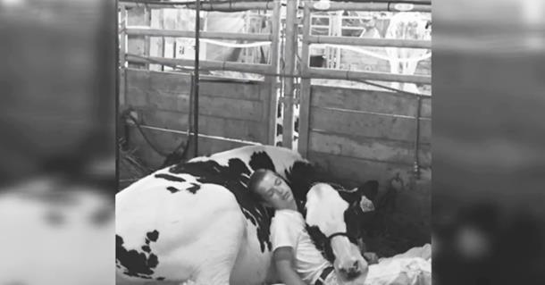 Подросток так подружился с коровой, что спит рядом с ней