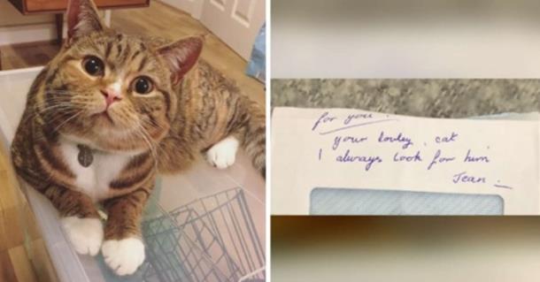 Любовное послание коту собрало 200 000 лайков