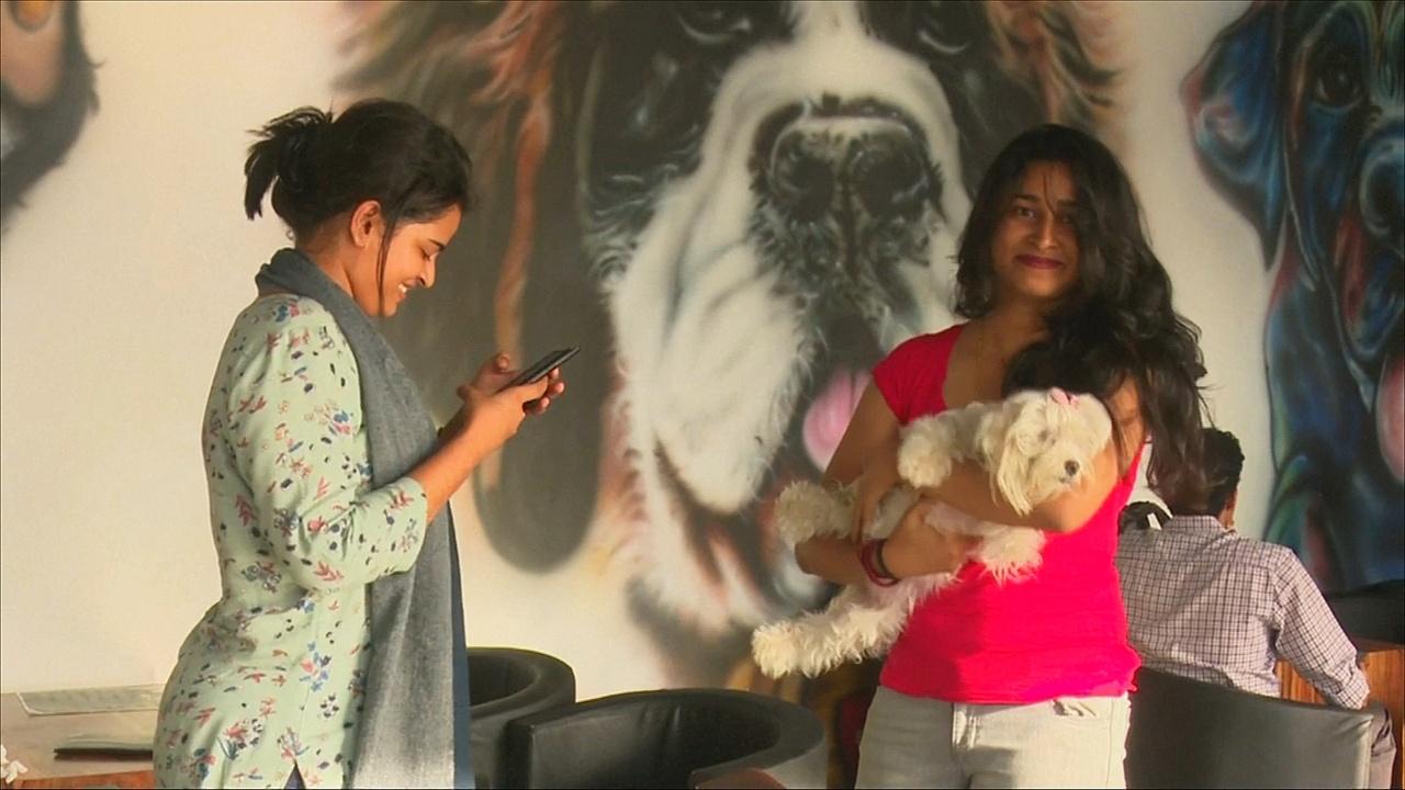 На юге Индии впервые открылось кафе для собак
