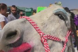 Мексиканский городок отпраздновал День трудолюбивого осла
