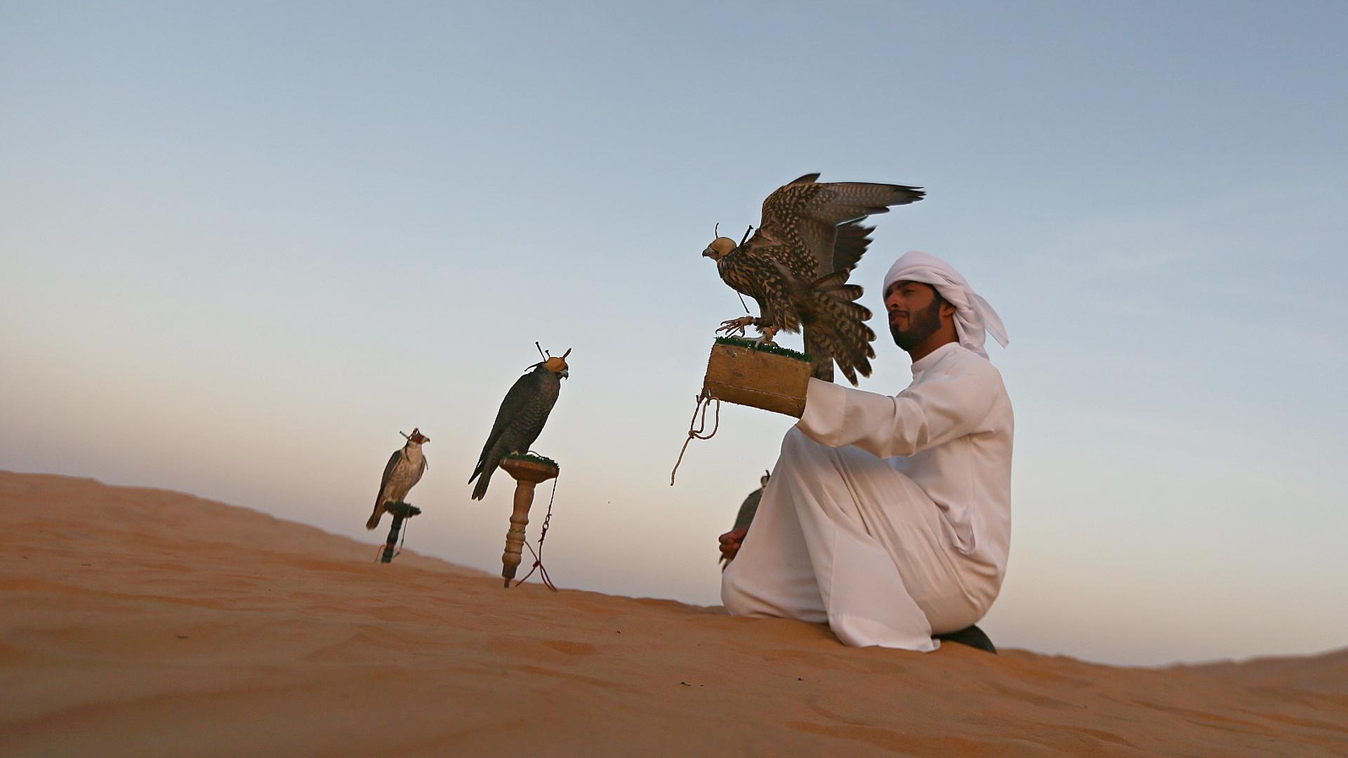 В Абу-Даби работает крупнейший в мире госпиталь для соколов