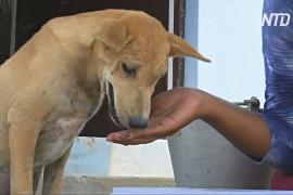 В Индии после циклона «Фани» спасают бездомных животных