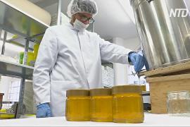 Из преступников – в пчеловоды: как перевоспитывают немецких заключённых