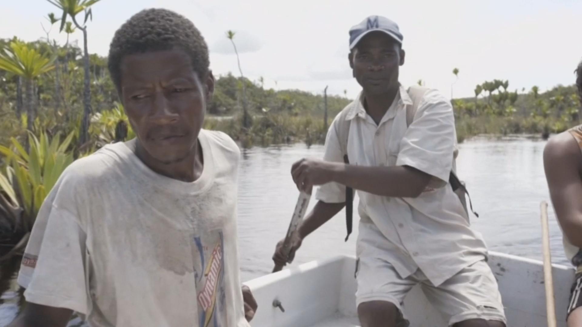 Жители Мадагаскара спасают свой уникальный лес от исчезновения