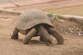 Всемирный день черепахи празднуют в зоопарке Лимы