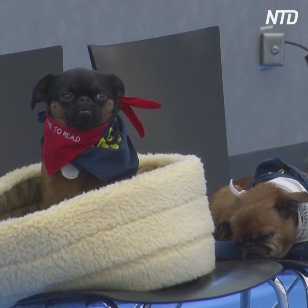 Как видит и слышит собака, можно прочувствовать на выставке в США