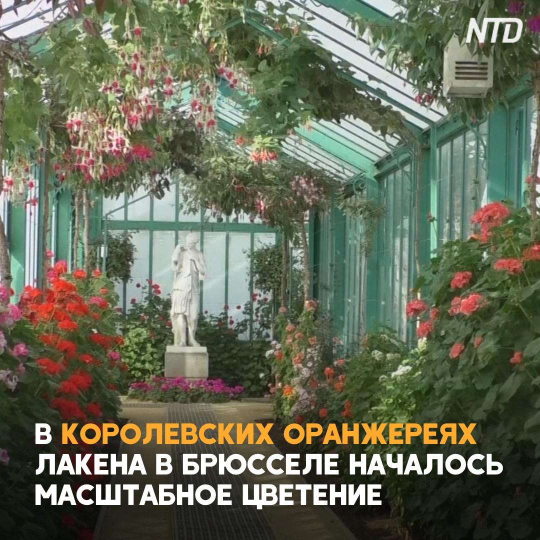 Оранжереи бельгийских королей снова открыты для гостей