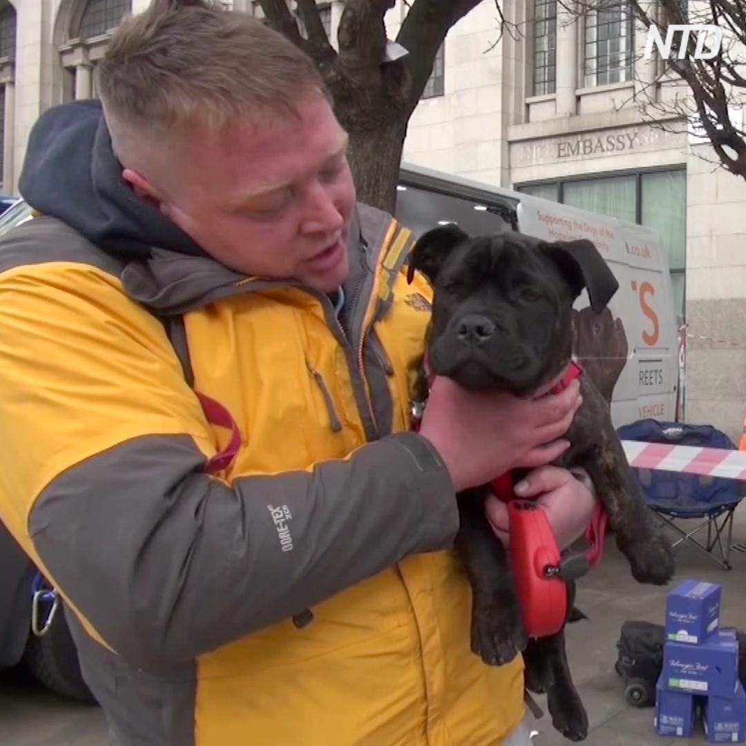 Где собак бездомных бесплатно кормят и лечат?