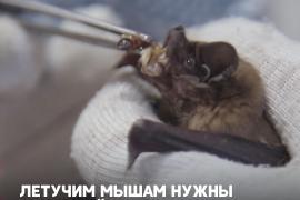 Жительница Воронежа выхаживает в своей квартире летучих мышей