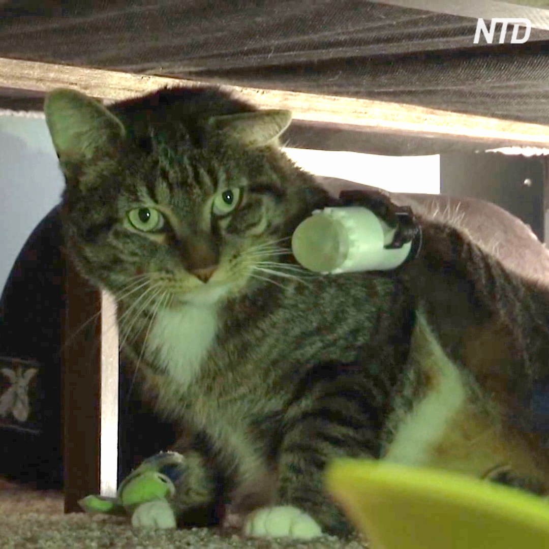 Для кота с ампутированными лапами сделали специальные протезы