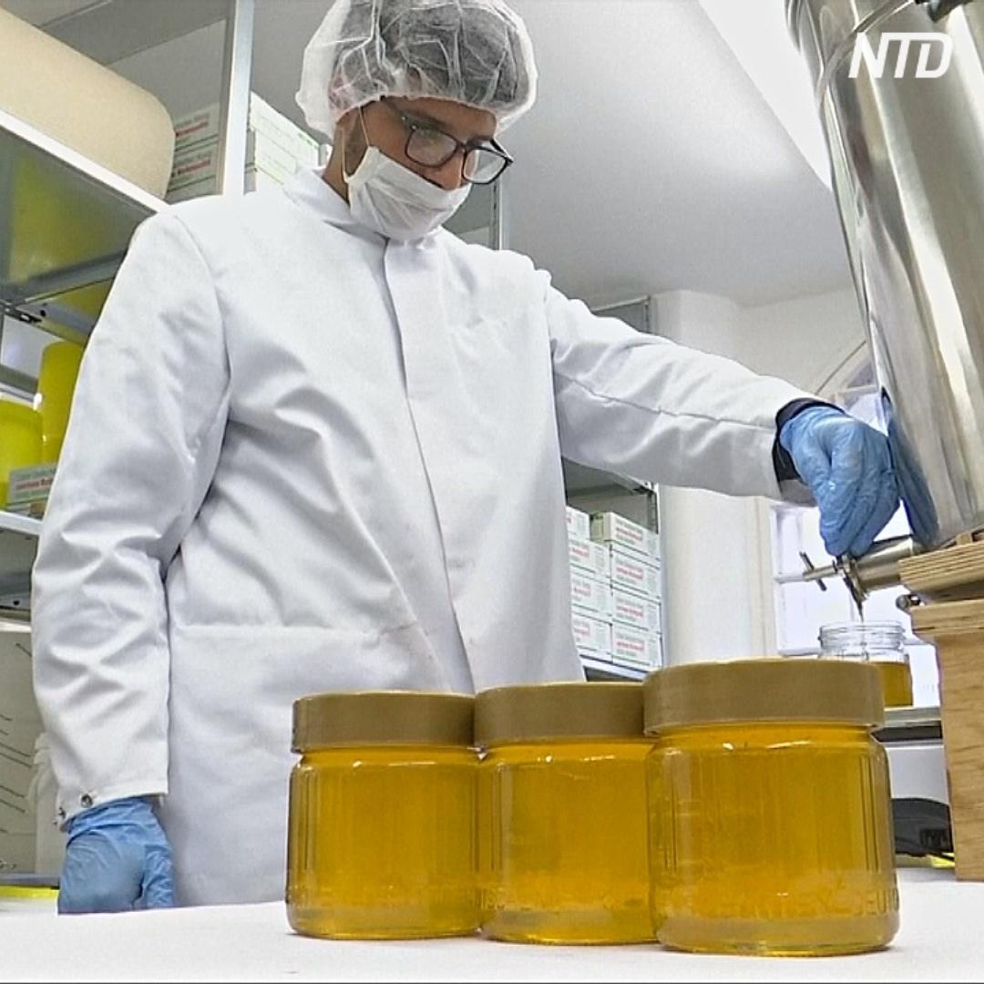 Как немецкие заключённые учатся делать мёд