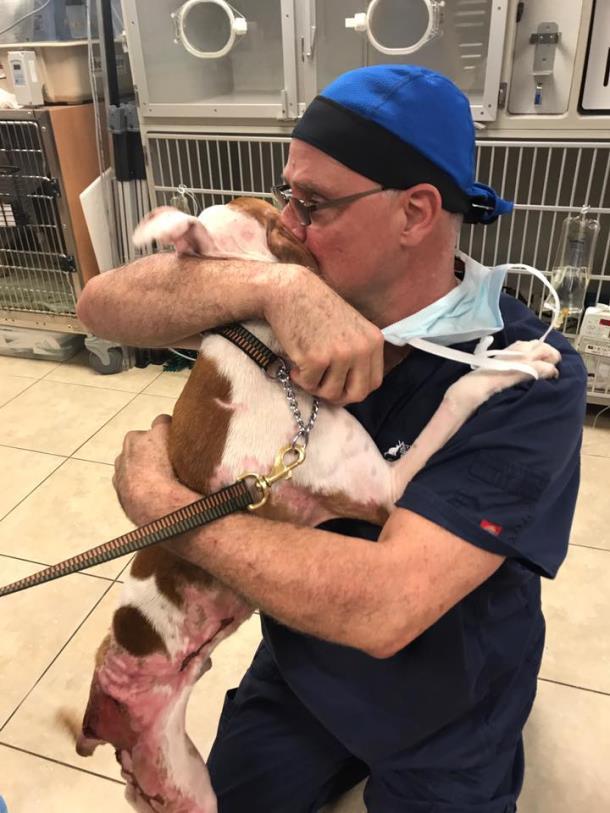 Novyj risunok 6 1 - Обгоревшая собака выздоровела и от радости сбила с ног своего спасителя