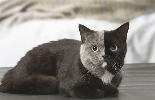 11 2 - Природный мейкап прославил кошку
