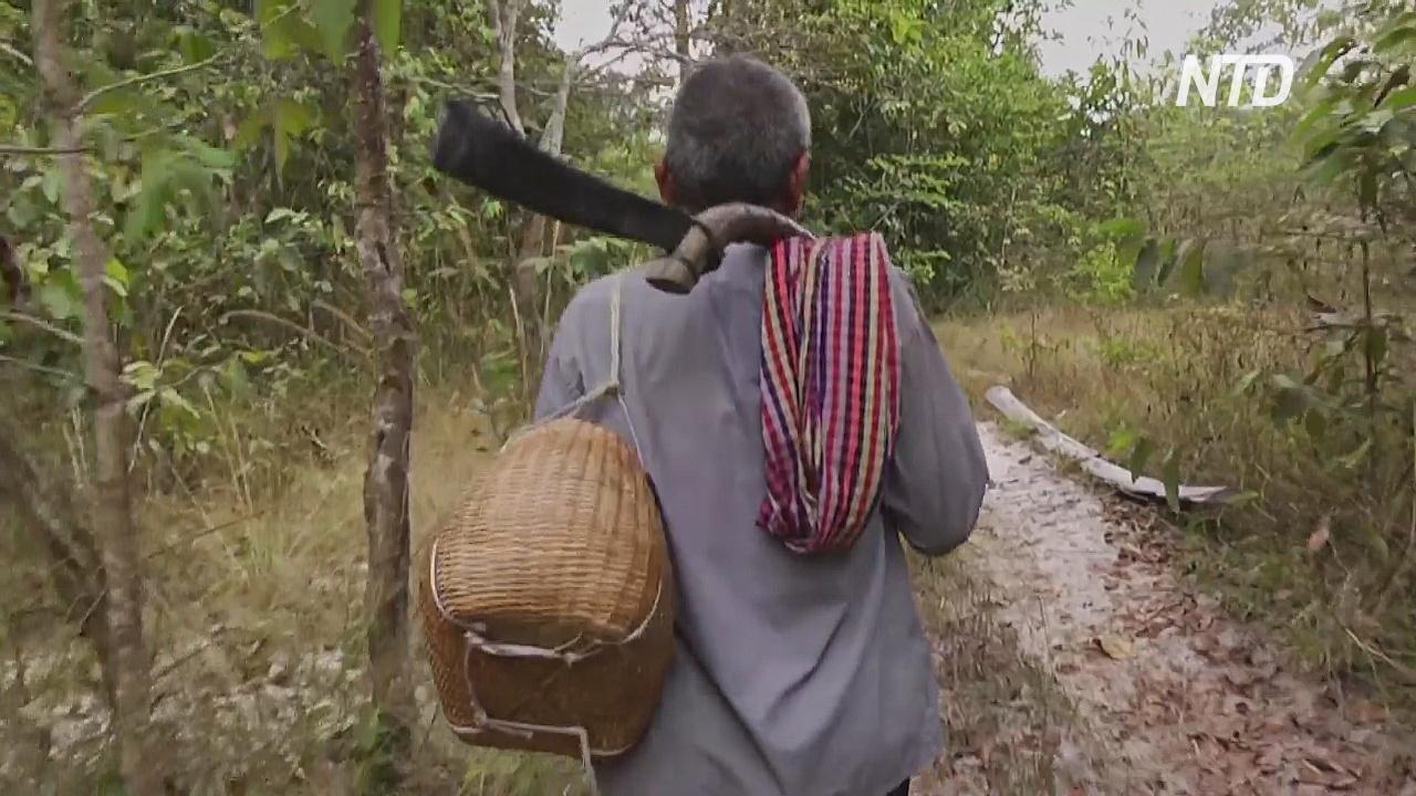 Жители камбоджийских лесов защищают джунгли с мачете