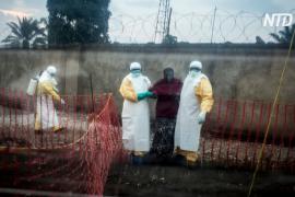 ВОЗ: в ДР Конго 25% случаев заболевания Эболой не выявлены