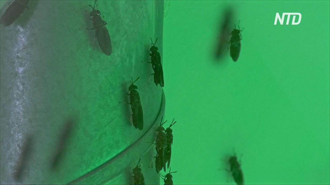 Как выглядит крупнейшая в мире ферма по выращиванию насекомых