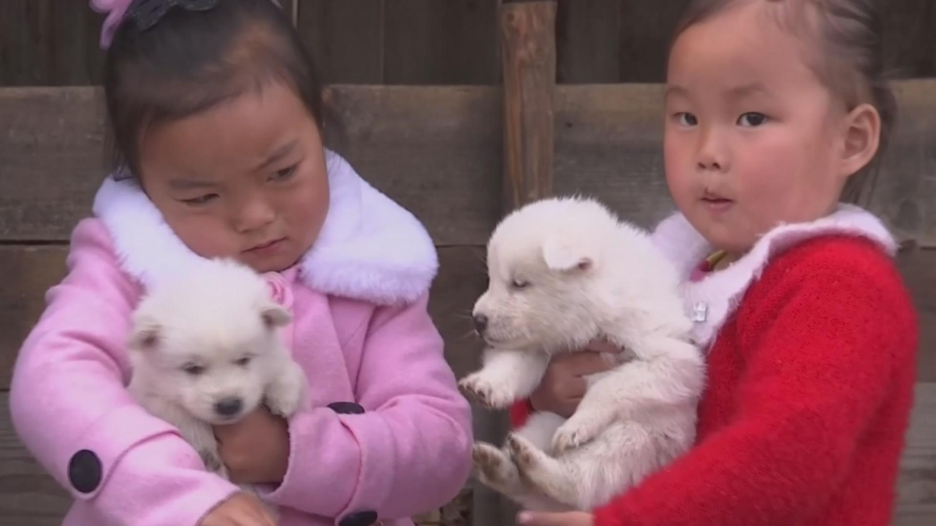 Собаки породы пхунсан – национальная гордость северокорейцев
