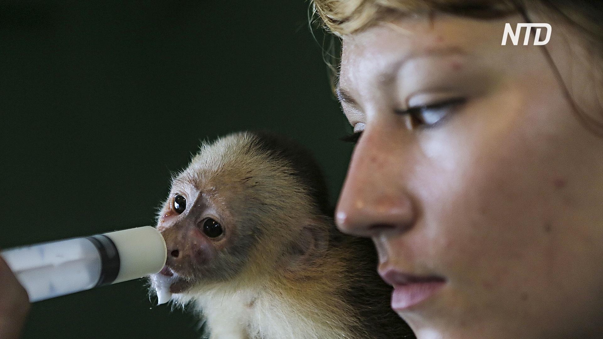 Волонтёрам по уходу за дикими животными тоже нужна помощь