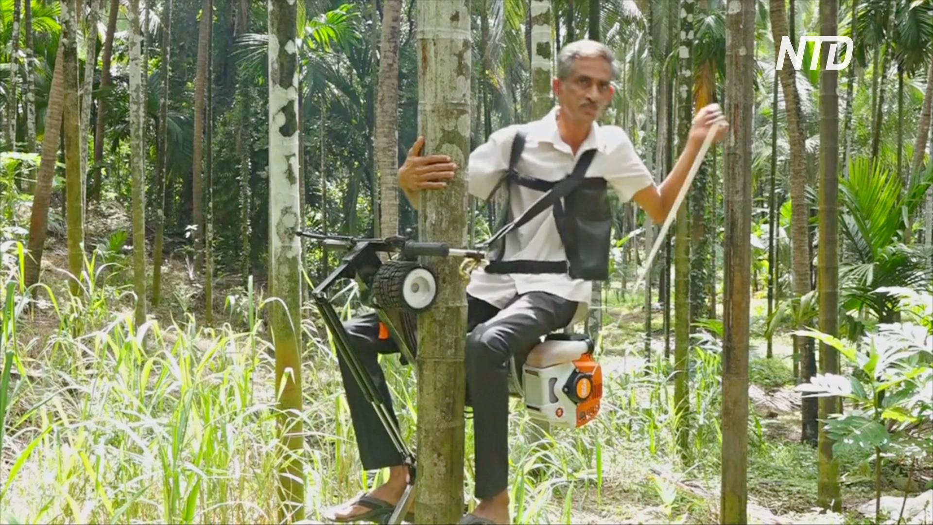 Изобретение индийца поможет собирать плоды с высоких пальм