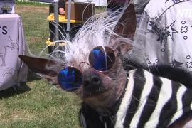 Безобразный и милый: в США выбрали самую страшненькую в мире собачку