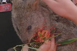 В новом зоопарке Аделаиды дети смогут общаться с животными