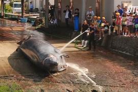 В японском городе Вада надеются сохранить традиции китобойного промысла