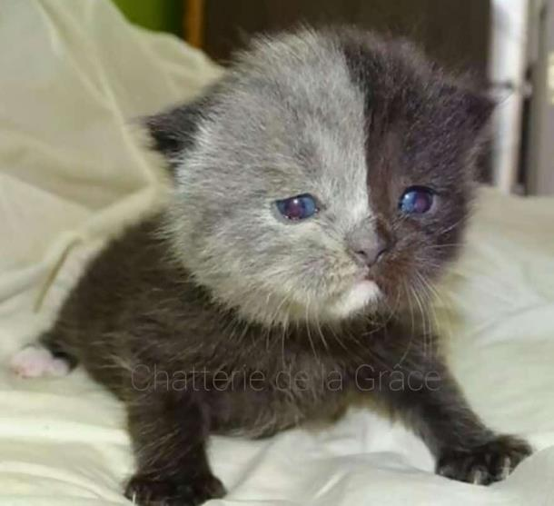 4 2 - Природный мейкап прославил кошку