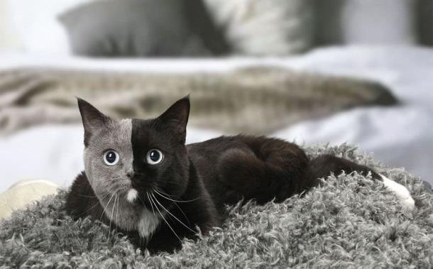 5 2 - Природный мейкап прославил кошку