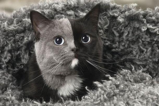 6 2 - Природный мейкап прославил кошку