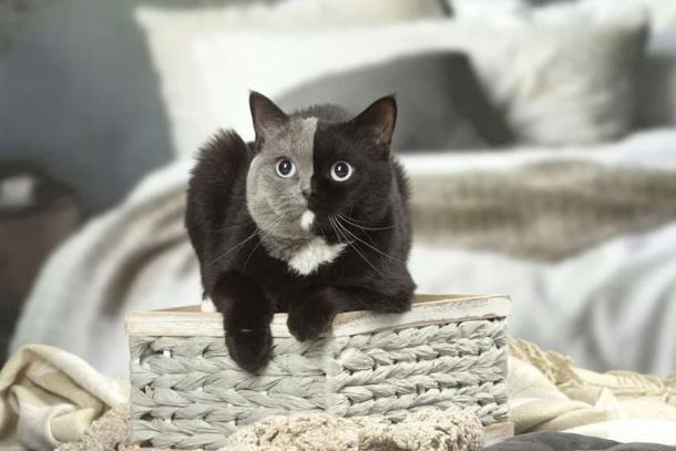 7 2 - Природный мейкап прославил кошку