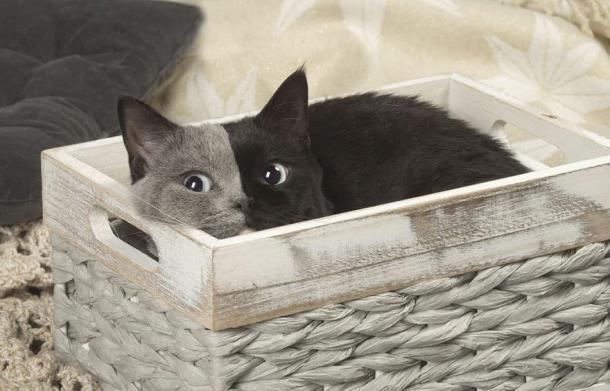 8 2 - Природный мейкап прославил кошку